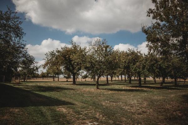 Umgeben von Obstbaumwiesen