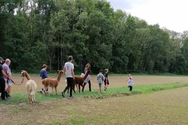Trekking-Touren mit den Alpakas