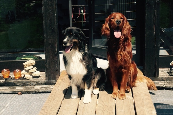 Bis zu drei Hunde sind herzlich willkommen!