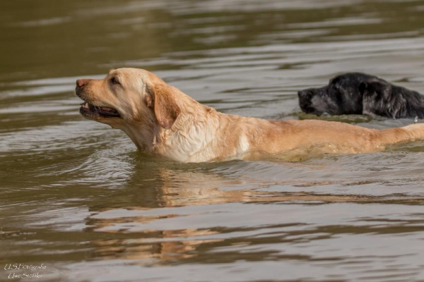 Hier können auch Ihre Hunde baden gehen